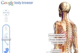 Google body browser 2