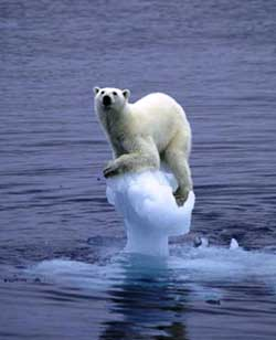 Polar_bear_clinging1