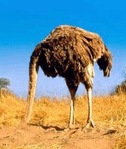 Ostrich7th