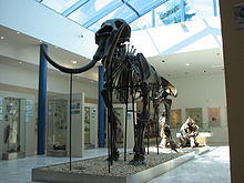 220px-Mammoth_skeleton_01