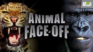 Animal face off
