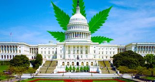CannabisHill_FB.4aabffc9fb3c5e7bfef73acc5067e886