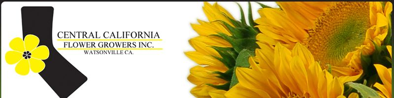 Sunflower_header11