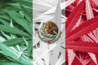 Mexico-Marijuana-900