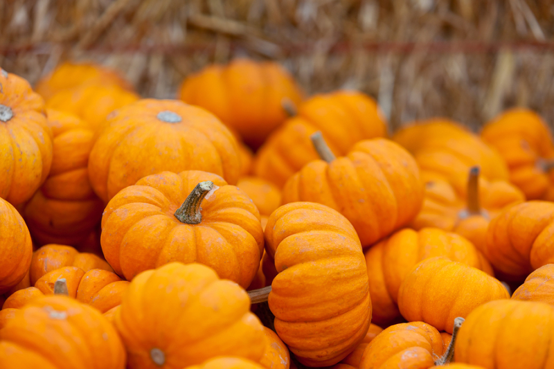 Bigstock-Pumpkin-Patch-68311816