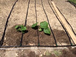 Plant june 3