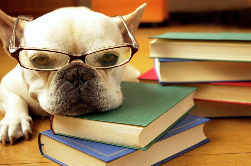 Dog Glasses books
