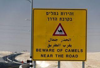 זהירות גמלים ברבת הדרך