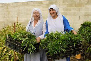 Nuns_grow_cannabis_at_abbey