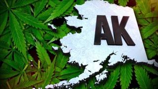 Alaska-weed-web
