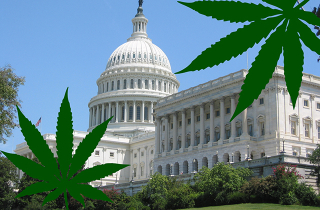 WashingtonDC-Capitol-Marijuana