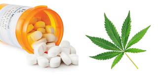 Marijuanavopioids