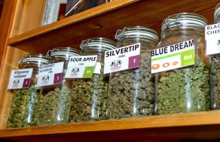 Montana-marijuana-CannabisNow-620x400