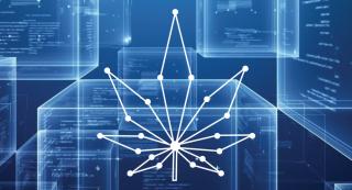 Marijuana-Blockchain-1-890x480
