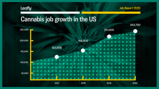 Cannabis_Job_Growth_web_1921