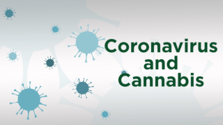 Coronavirusandcannabisgraphic