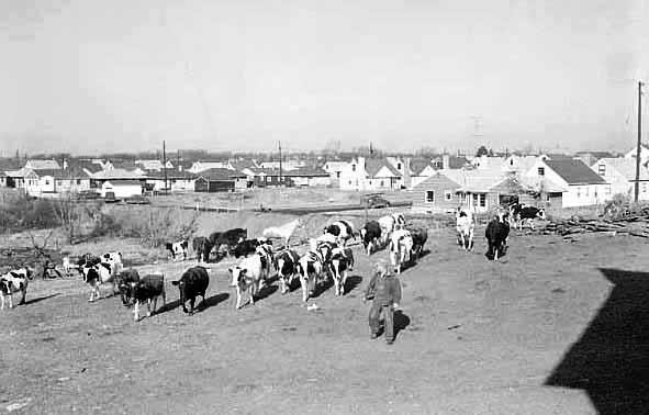 Suburb 1950s