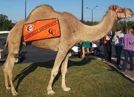 Campbell Camel