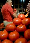 Tomato_industry